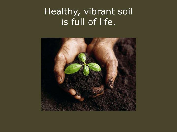 Healthy, vibrant soil