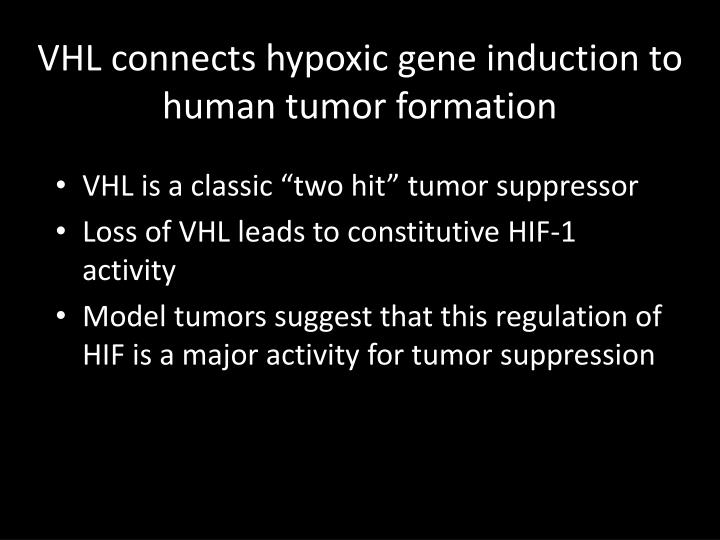 VHL connects hypoxic gene induction to human tumor formation