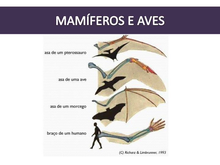 MAMÍFEROS E AVES