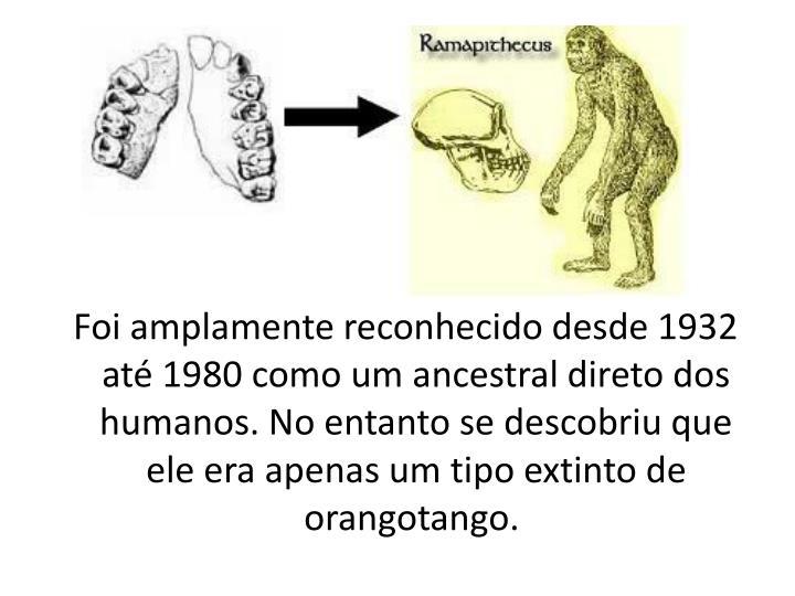 Foi amplamente reconhecido desde 1932 até 1980 como um ancestral direto dos humanos. No entanto se descobriu que ele era apenas um tipo extinto de orangotango.