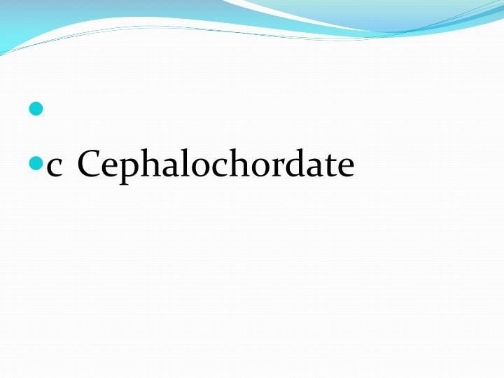cCephalochordate