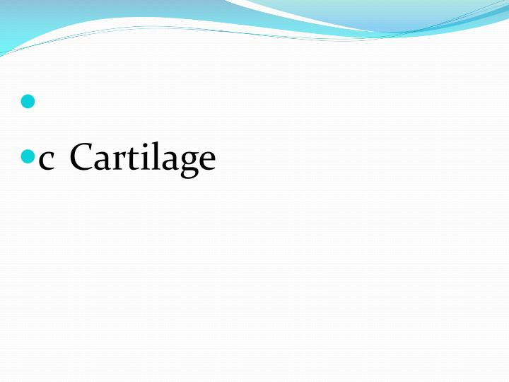 cCartilage