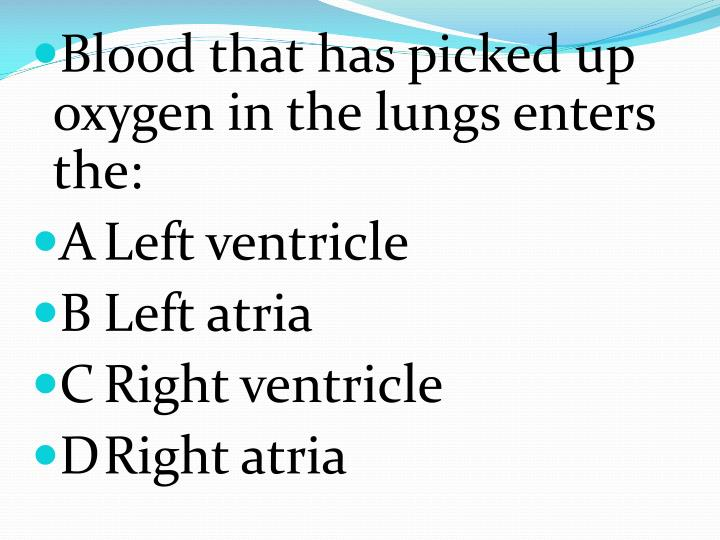 Blood that has picked up oxygen in the lungs enters the: