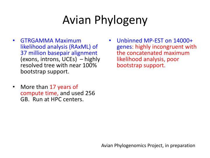 Avian Phylogeny