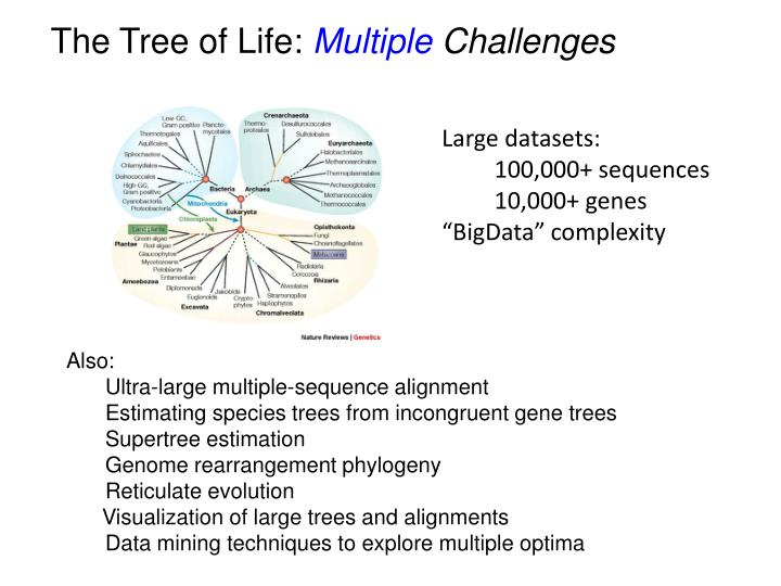 The Tree of Life: