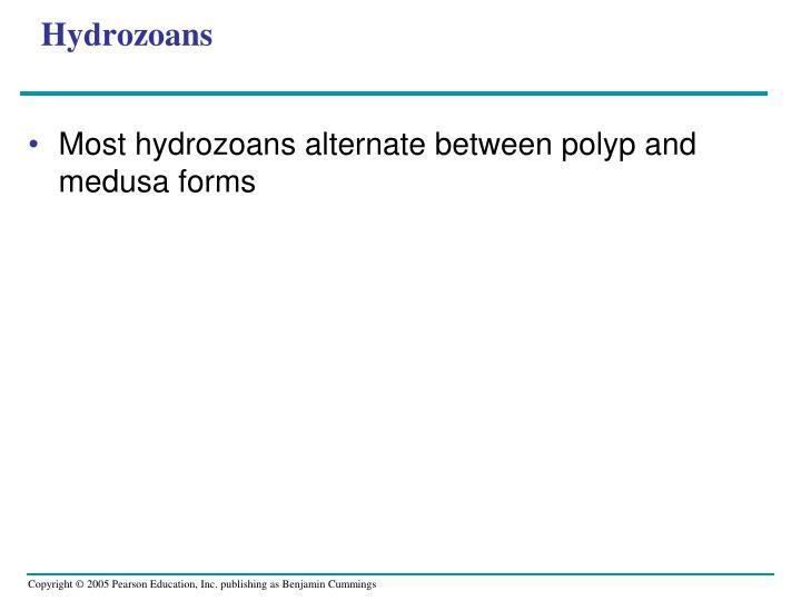 Hydrozoans