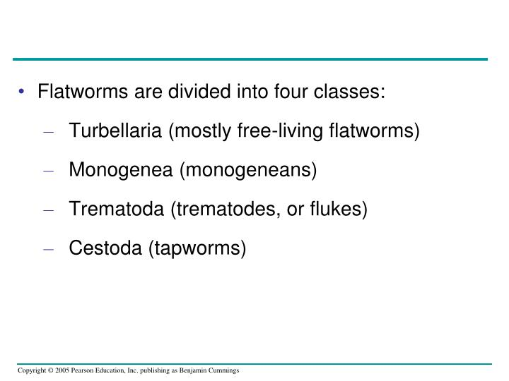 Flatworms are divided into four classes: