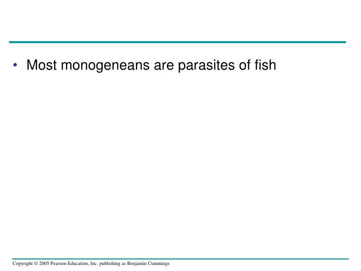 Most monogeneans are parasites of fish