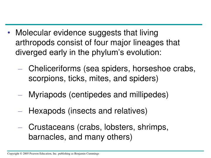 Molecular evidence suggests that living arthropods consist of four major lineages that diverged early in the phylum's evolution: