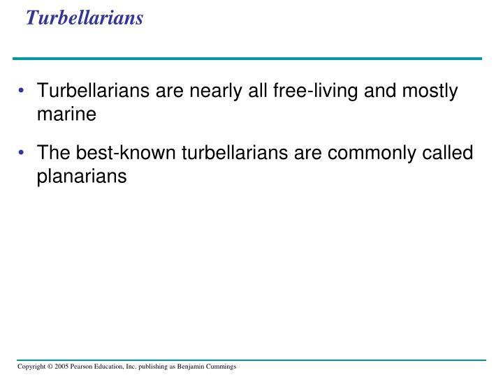 Turbellarians