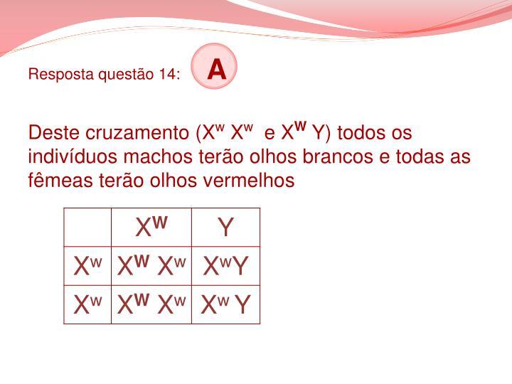Resposta questão 14: