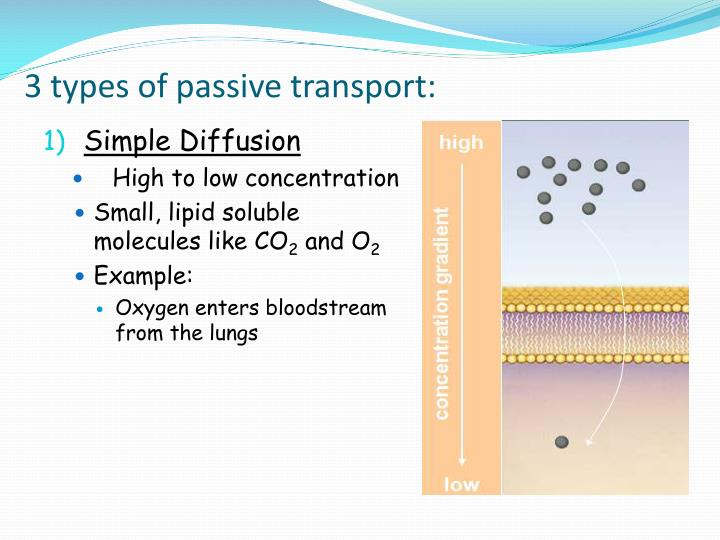3 types of passive transport: