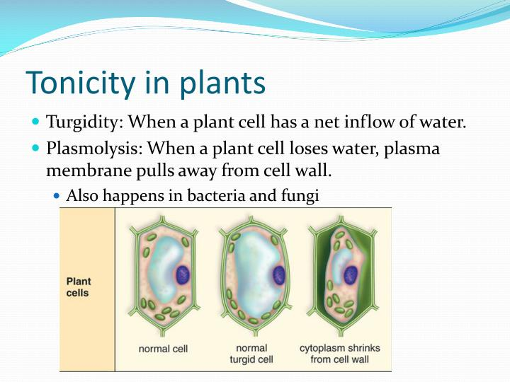 Tonicity in plants