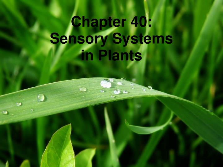 Chapter 40 sensory systems in plants