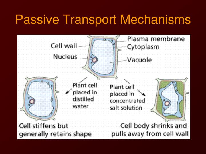 the cell transport mechanisms and cell Review of biological principles develop an understanding of lipids, nucleic acids) structure and functions of cells, cellular organelles, cell specialization, communication among cells cell as a living system, homeostasis, cellular transport, energy use and release in biochemical.
