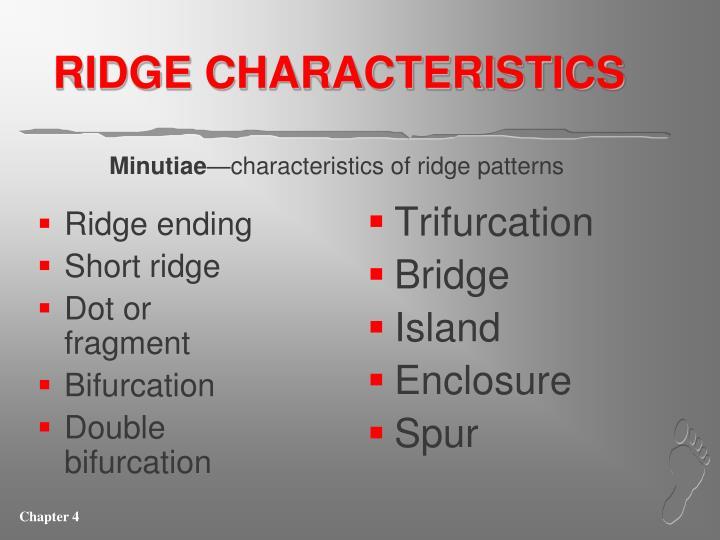 RIDGE CHARACTERISTICS