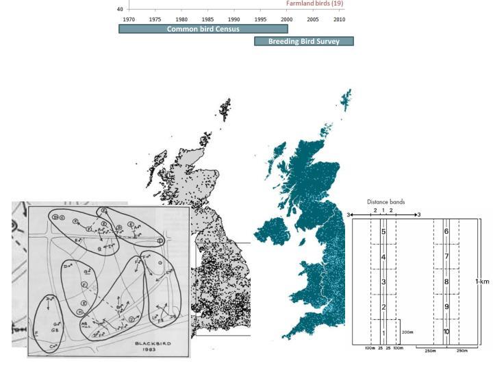 Common bird Census