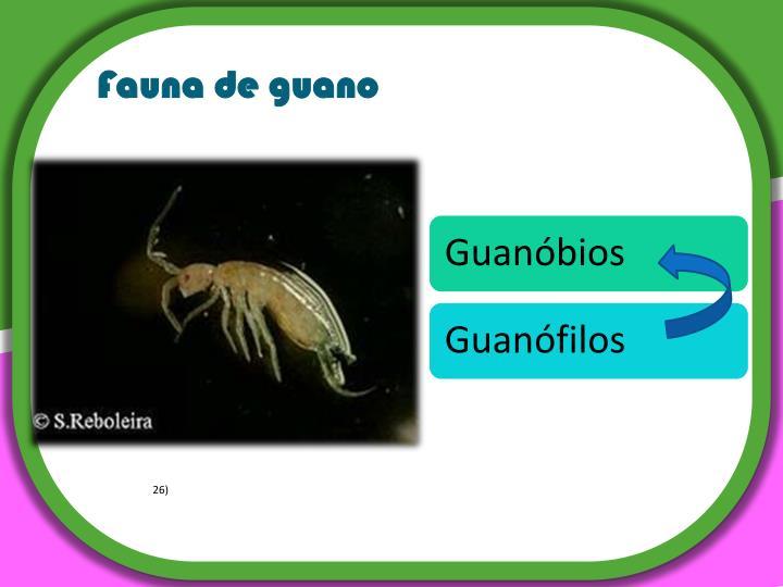 Fauna de guano