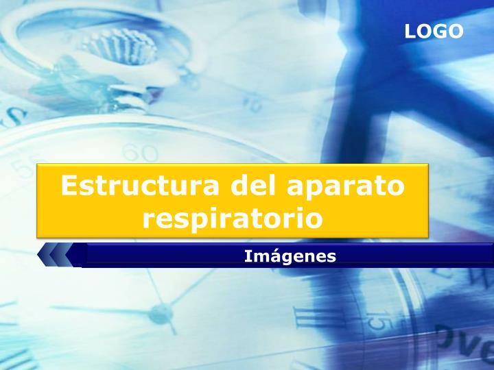 Estructura del aparato respiratorio