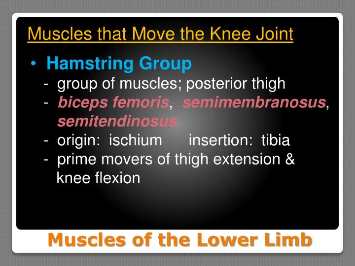 Muscles that Move the Knee Joint
