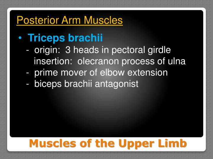 Posterior Arm Muscles