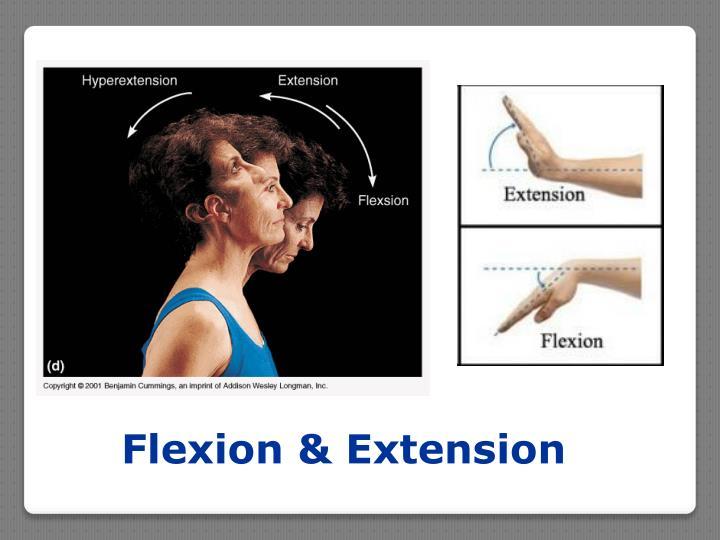 Flexion & Extension