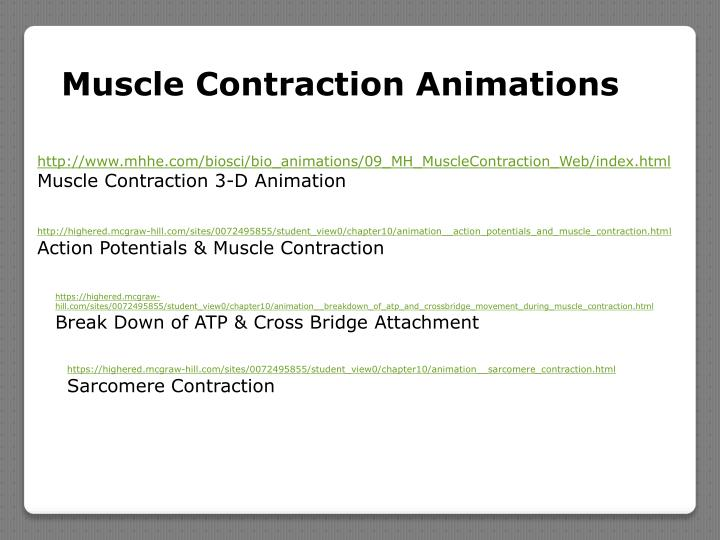 Muscle Contraction Animations