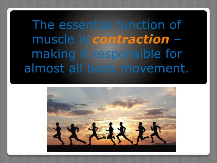 The essential function of muscle is contraction making it responsible for almost all body movement