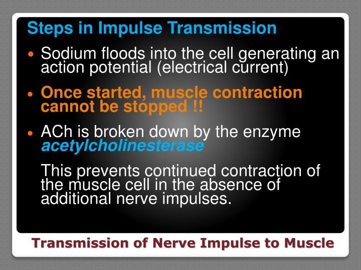 Steps in Impulse Transmission