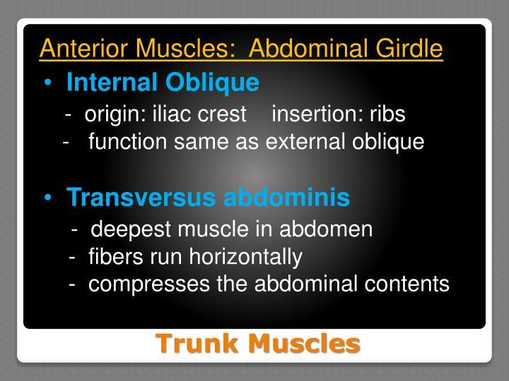 Anterior Muscles:  Abdominal Girdle
