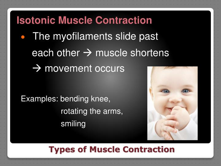 Isotonic Muscle Contraction