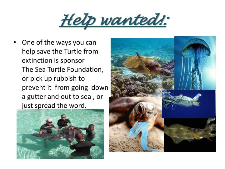 Help wanted!: