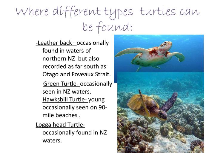 Where different types  turtles can be found: