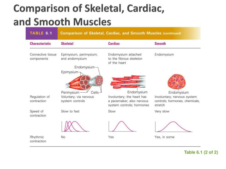 Comparison of skeletal cardiac and smooth muscles