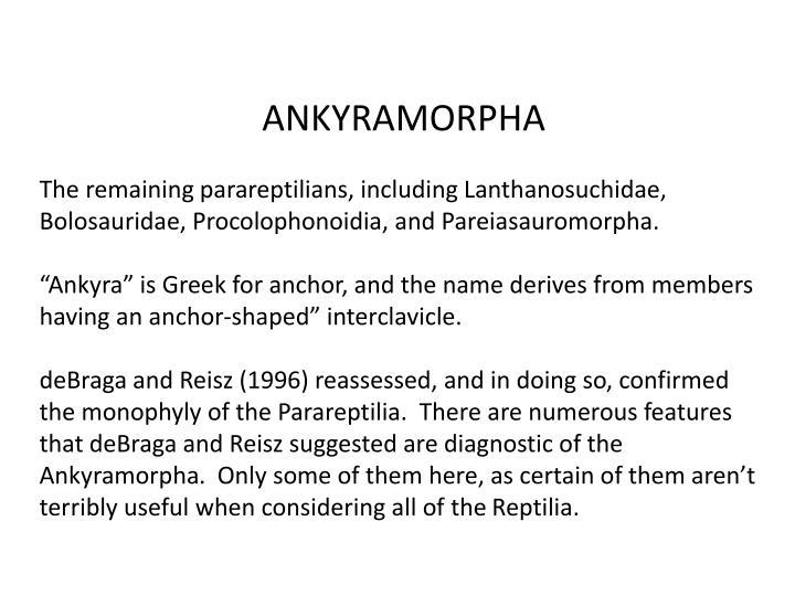 ANKYRAMORPHA