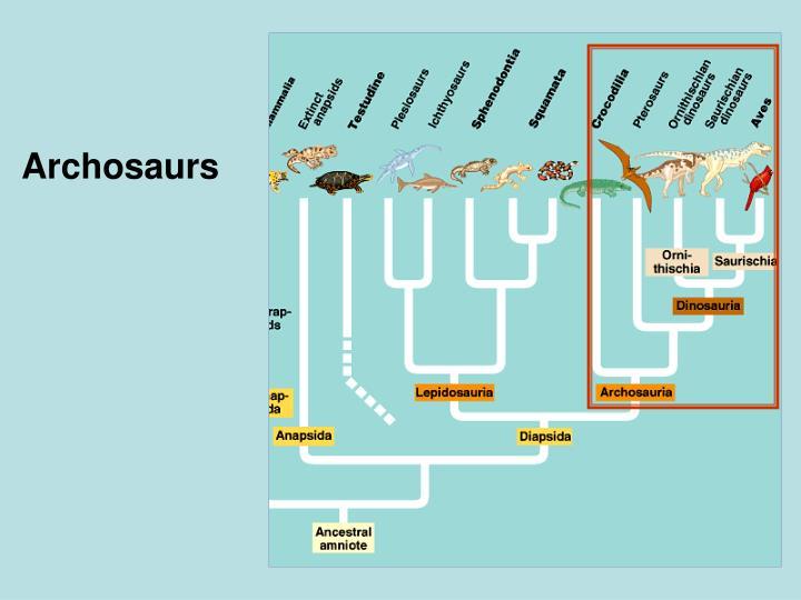 Archosaurs