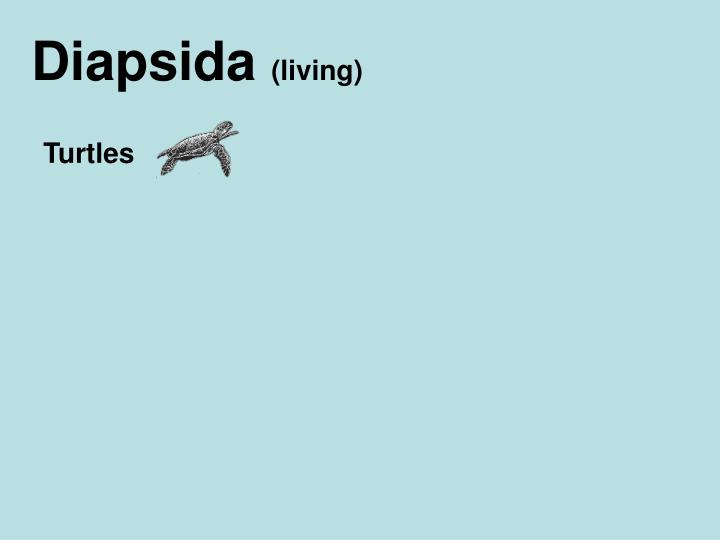 Diapsida