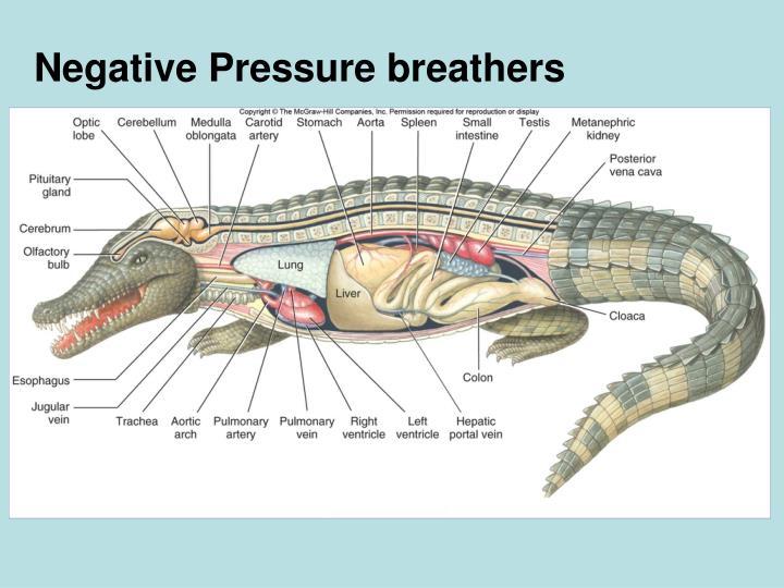 Negative Pressure breathers