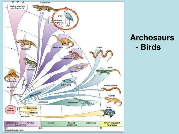 Archosaurs - Birds