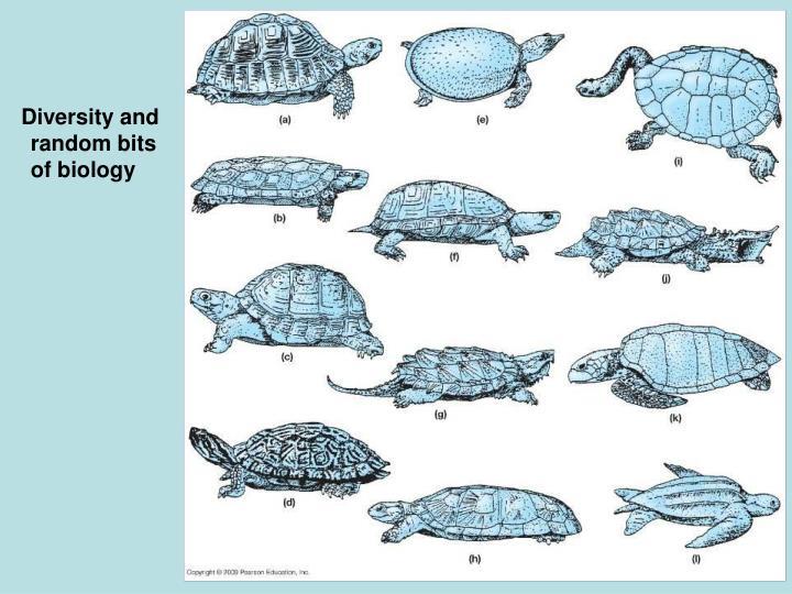 Diversity and random bits of biology