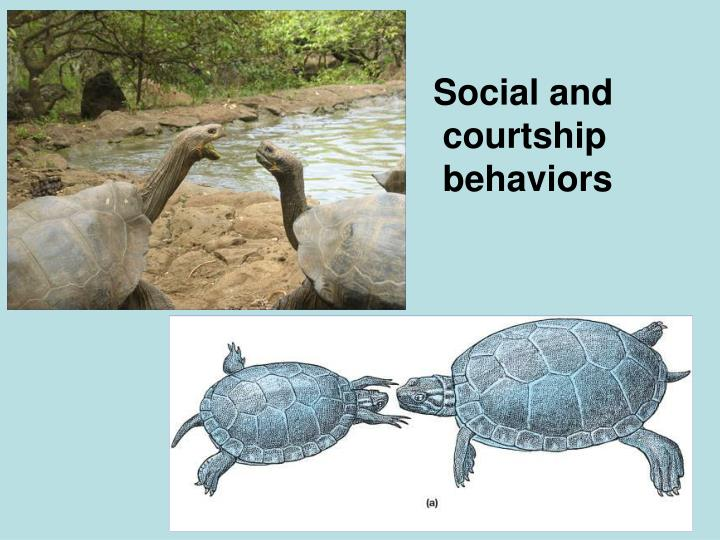Social and courtship behaviors