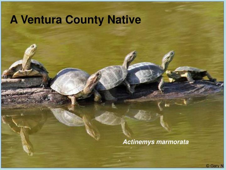 A Ventura County Native