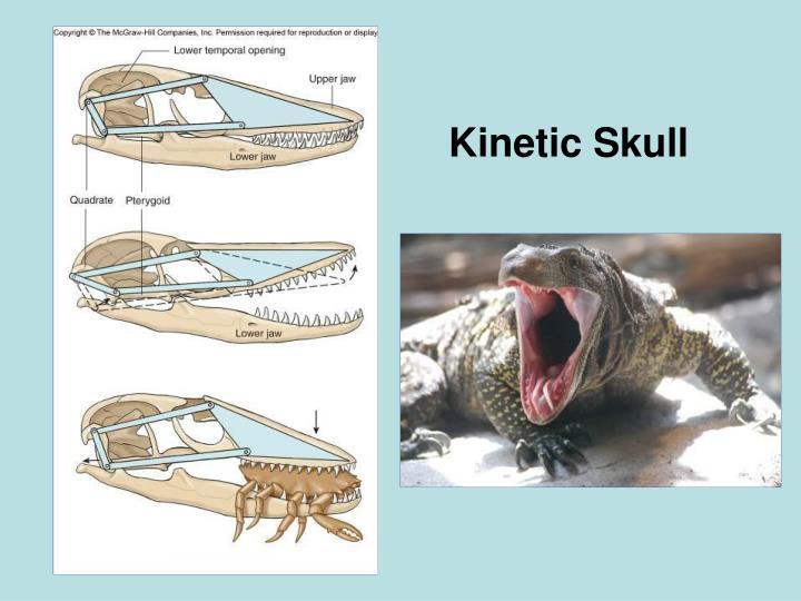 Kinetic Skull