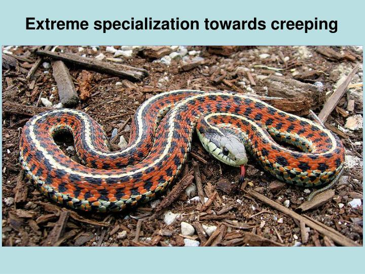Extreme specialization towards creeping