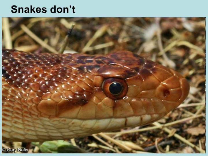 Snakes don't
