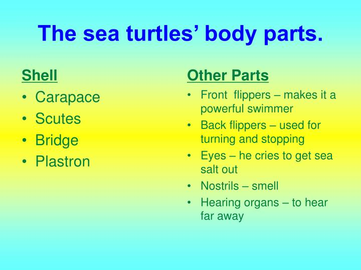 The sea turtles' body parts.