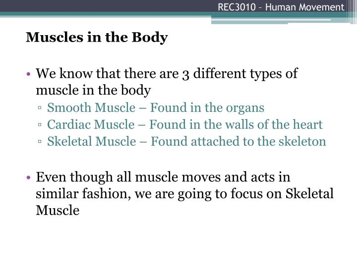 Rec3010 human movement