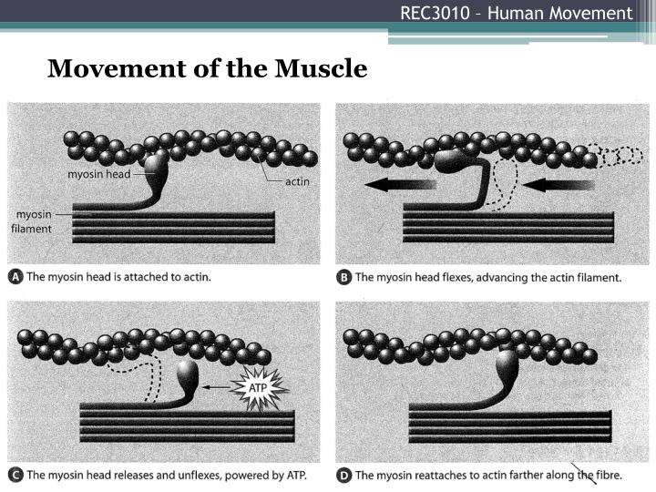 REC3010 – Human Movement