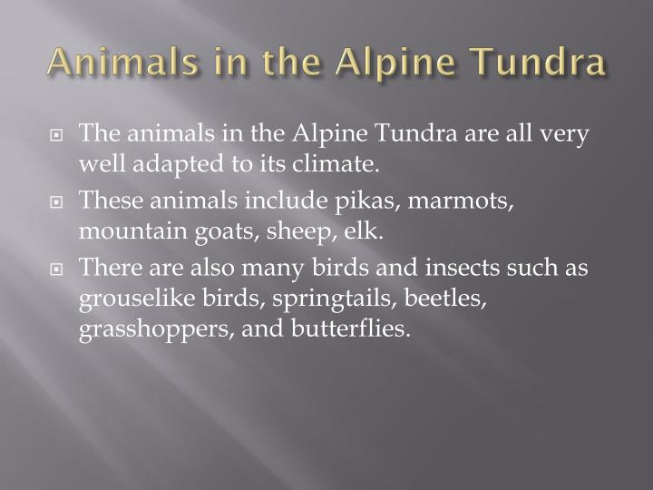 Animals in the Alpine Tundra