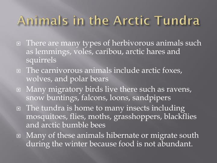 Animals in the Arctic Tundra